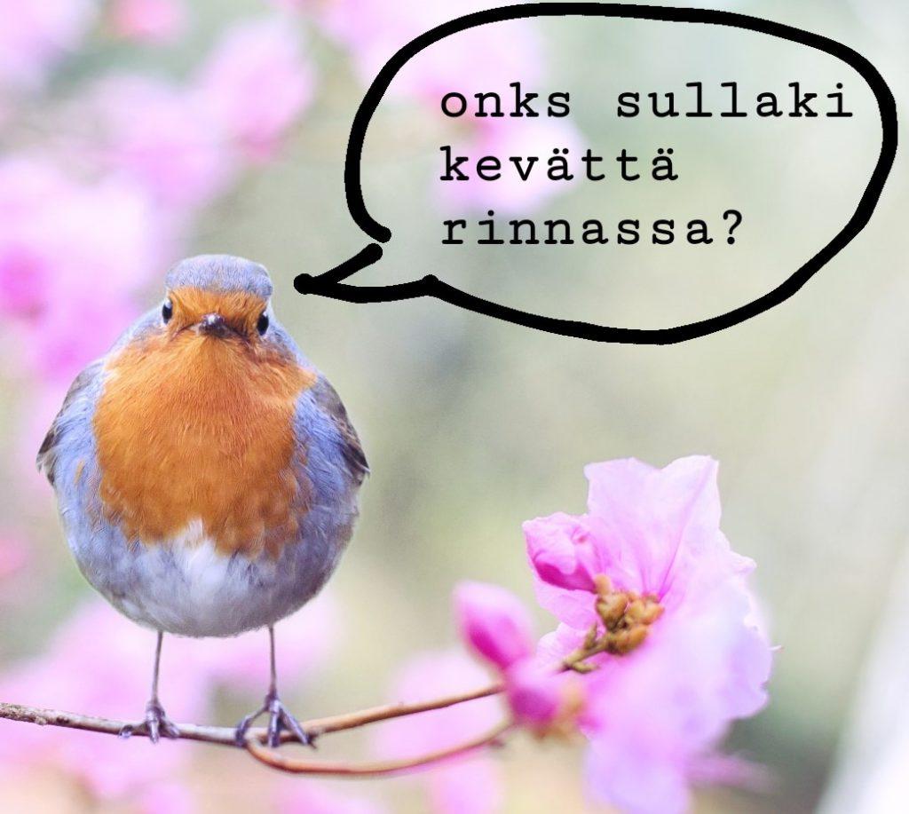 """Lintu oksalla, jonka suusta tulee puhekupla, jossa lukee: """"onks sullaki kevättä rinnassa?"""""""